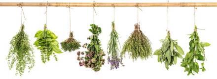 Que-son-y-para-que-sirven-las-plantas-medicinales